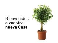 invitacion feria33